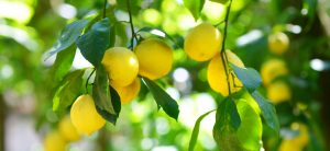 Un limone da Poker