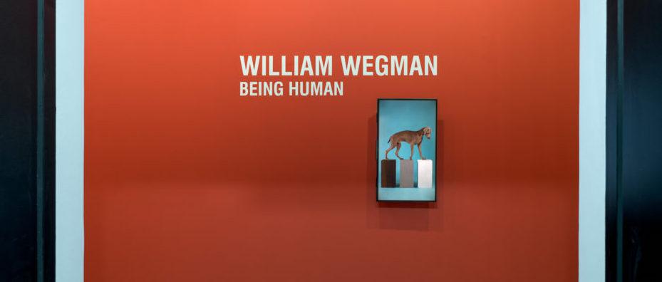 WILLIAM WEGMAN. Being human - Museo d'arte della Svizzera italiana, Lugano, Switzerland