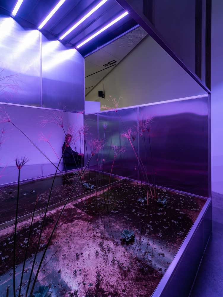 Israel Pavilion at the 2021 Venice Biennale Highlights the Impact of Agriculture on Communities, Landscapes and Fauna © Matteo Losurdo